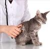 Ветеринарные клиники в Варгашах